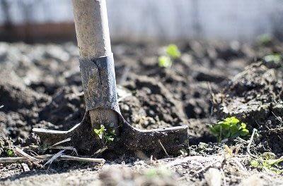 Prepare the Soil for Organic Gardening